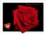 On Valentine's Day by LynEve, Photography->General gallery
