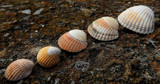Shelling out by braces, photography->nature gallery