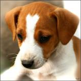 Happy Birthday Boris aka SAAB by 0930_23, photography->pets gallery