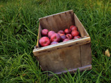 Apple Picking In The Big Apple by Jims, Photography->Nature gallery