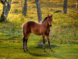 Foal by Junglegeorge, Photography->Animals gallery