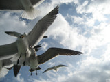 Ferry Seagulls by Skynet5, Photography->Birds gallery