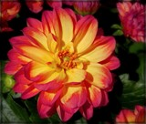 Two Tone Dahlia by trixxie17, photography->flowers gallery
