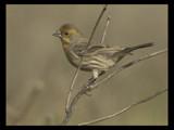 Variant by garrettparkinson, Photography->Birds gallery