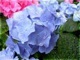 Pure in the rain by jennyvladimirova, Photography->Flowers gallery