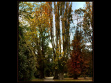 Autumn Shades #1 by LynEve, Photography->Landscape gallery