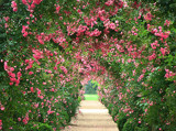 Rose Archway Path by ohpampered1, Photography->Gardens gallery
