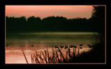 misty ducks by JQ, Photography->Sunset/Rise gallery