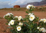 Navajo Homesite by jeenie11, Photography->Flowers gallery