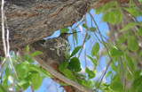 HummingBird by jrcro96, Photography->Birds gallery