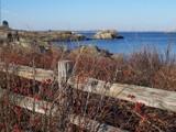 fenced by kiciaczek, Photography->Shorelines gallery