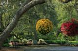 Live Oak Plaza by allisontaylor, photography->gardens gallery