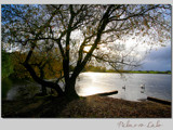 nature's dream... by fogz, Photography->Shorelines gallery