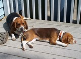 Relaxin' on the deck by mike4820, photography->pets gallery
