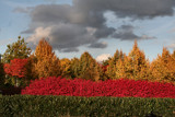 Ahhhh the Red, the Red!!! by verenabloo, Photography->Landscape gallery