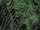 Diamonds are a spider's best friend by zippee, photography->nature gallery