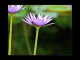 Dancin' on Glass by Hottrockin, Photography->Flowers gallery