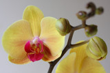 Orchid by Paul_Gerritsen, Photography->Flowers gallery