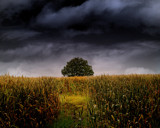 SOLITARY TREE by LANJOCKEY, Photography->Landscape gallery