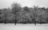 2008 New year's snow by hsu0504, Photography->Landscape gallery