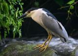 Creek Watcher by legster69, Photography->Birds gallery