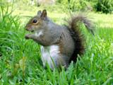 Bok Sanctuary - Squirrel by CanoeGuru, Photography->Animals gallery