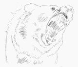 Don't Mess With a Grizzly Bear by MustangGirl95, illustrations->digital gallery