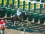 Arlington Racecourse 13 - Loading the Gate by trixxie17, photography->animals gallery
