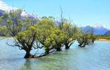 The Willows Of Glenorchy by LynEve, photography->landscape gallery