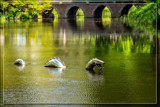 Nessie's Return by corngrowth, photography->reptiles/amphibians gallery