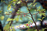 Fall Berries by timw4mail, photography->nature gallery