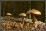 MINIATURE WORLD by MsCROW, photography->mushrooms gallery