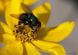 Calendar Garden Capture by tigger3, photography->macro gallery