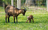 Newborn by boremachine, Photography->Animals gallery