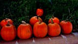 Pumpkin Time by galaxygirl1, holidays gallery