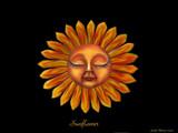 Sunflower by tweeker2, illustrations gallery