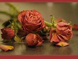 eternity... by fogz, Photography->Flowers gallery