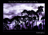 Trees by JQ, Photography->Manipulation gallery