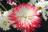 Raspberry Sorbet by jerseygurl, photography->flowers gallery