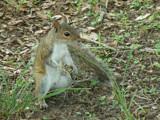 """Little Helper!!"" by muki7, Photography->Animals gallery"