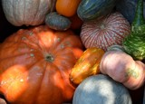 Pumpkins & Gourds by photoeye68, holidays gallery