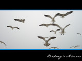Birdsong's Minions by bcbird, Photography->Birds gallery