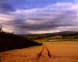 READY FOR HARVEST by LANJOCKEY, Photography->Landscape gallery