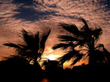 Wind & Palms by ederyunai, Photography->Sunset/Rise gallery
