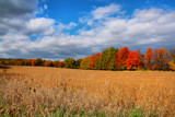 Roadside Color by tigger3, Photography->Landscape gallery