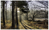 Into The Light by mailsparky, photography->landscape gallery