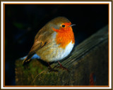 LITTLE STRANGER by LANJOCKEY, photography->birds gallery