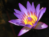 Inner Light by spoton, Photography->Flowers gallery