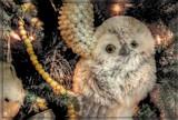 Snowy by trixxie17, holidays->christmas gallery