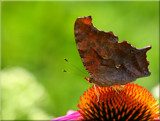 Butterflied by tigger3, photography->butterflies gallery